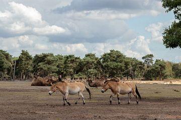 Wildlife van Anjella Buckens