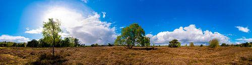 Groevenbeekse Heide - Panorama van