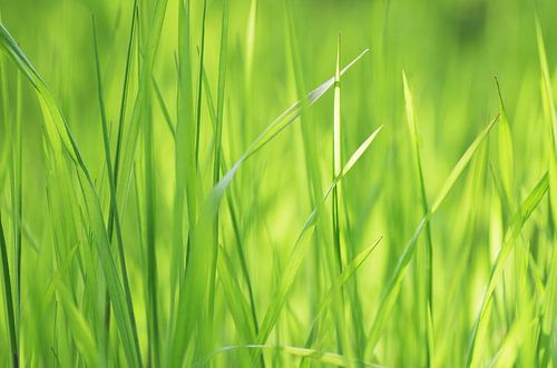 Wellness grassen van Tanja Riedel