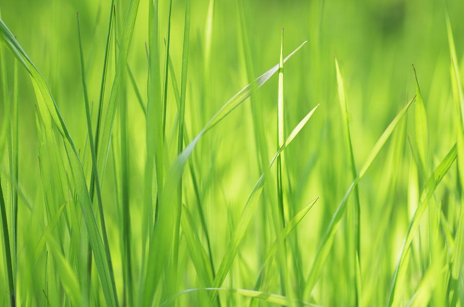 Wellness grassen