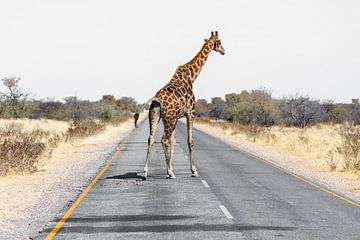 Giraffe auf Strasse van Felix Brönnimann