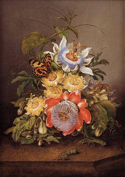 Passionsblumen, Ferdinand Bauer