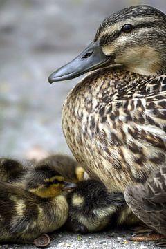Moeder met de kleintjes van Mario de Lijser