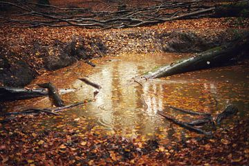 Wasserloch von Jos Venes