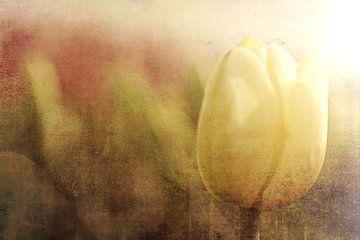 Tulp von Joanne de Graaff