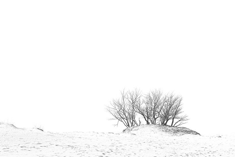 Arbres dans les dunes sur Dion de Bakker