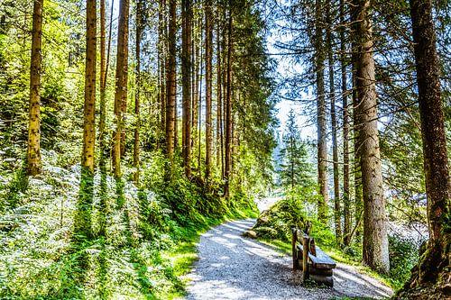 Wandelweg in de natuur