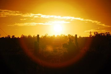 zons ondergang van nick kooijman