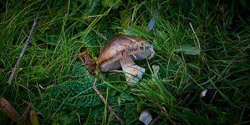 Gebroken paddestoel in het groen van Jenco van Zalk