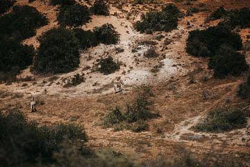 Die afrikanische Landschaft. Erkennen Sie die Zebras? von Floor Bogaerts