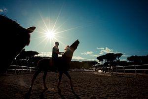 Paard en ruiter bij zonsondergang