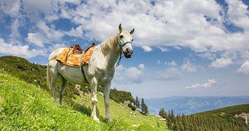 Wit paard in de Karpaten van Roemenië van Marc Venema
