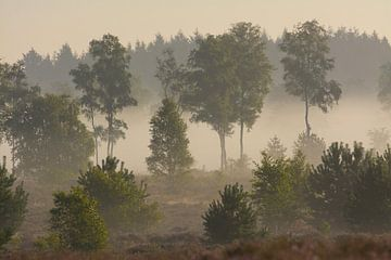 Bomen in de mist von Remco Van Daalen