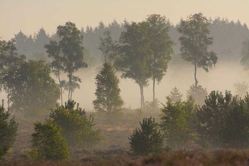 Bomen in de mist van Remco Van Daalen
