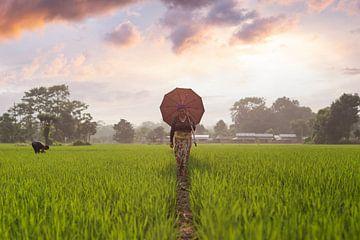 Reisfeld Nepal (Sonnenuntergang) von Merijn Geurts