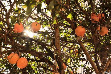 Sommerlicher Granatapfel von Samira Uddin