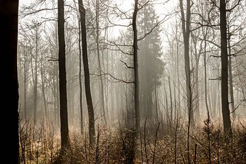 Winter-Wald von Emma Jansen