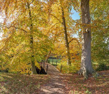 Boslaan met bruggetje in herfstkleuren, buitenplaats Jagtlust, s-Graveland, , Noord-Holland, Nederla van
