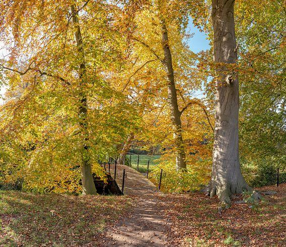 Boslaan met bruggetje in herfstkleuren, buitenplaats Jagtlust, s-Graveland, , Noord-Holland, Nederla
