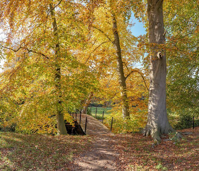 Boslaan met bruggetje in herfstkleuren, buitenplaats Jagtlust, s-Graveland, , Noord-Holland, Nederla van Rene van der Meer