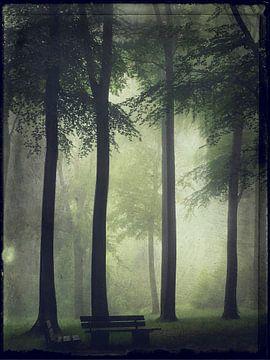 Sommerwald im Nebel von Dirk Wüstenhagen
