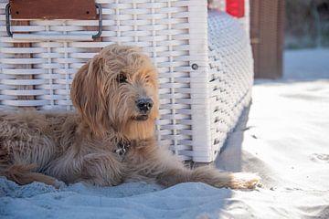 Strandurlaub mit Hund von Stephan Schulz