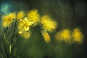 Jonquilles jaunes sur fond vert sur Jan van der Linden