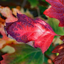 Rode herfstkleuren van Ludo Verhoeven