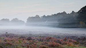 Mistig  heide landschap van Art Wittingen