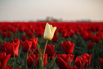 Tulpen van Jasmijn Visser