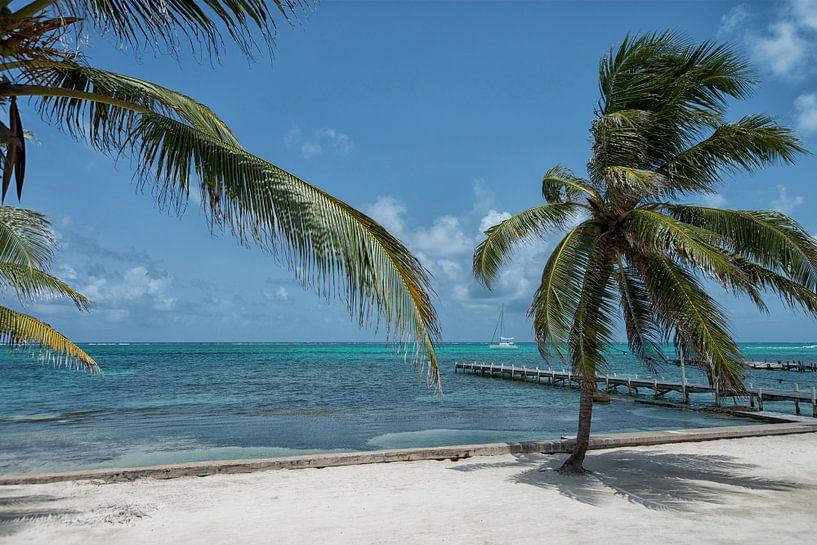 Coconut paradise van Aline van Weert