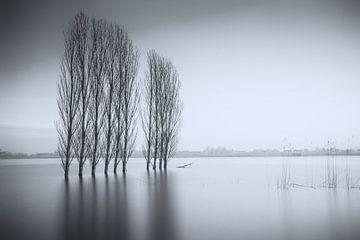 Bomenrij in het water von Jan van der Vlies