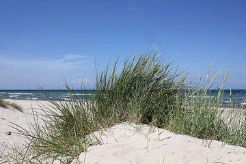 Natürlich sur Ostsee Bilder