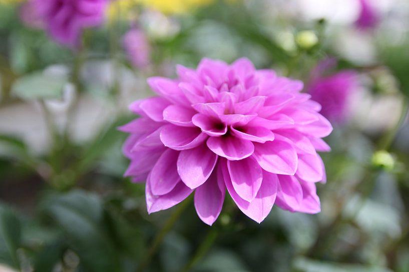 The Violet Flower van Cornelis (Cees) Cornelissen