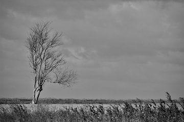Alleen in het Franse veld... von DoDiLa Foto's