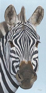 Zebra Porträt von Russell Hinckley