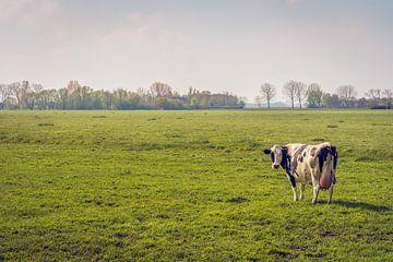 Schwarz-weiße Kuh, die allein auf der Wiese steht. von Ruud Morijn