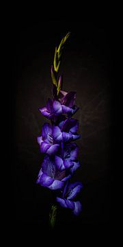 Diep paarse monnikskap bloem tegen donkere achtergrond. van MICHEL WETTSTEIN