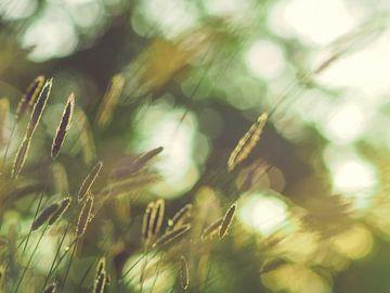 Grassen en licht 5