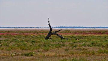 Dode boomstronk op een kleurrijke weide in Etosha van Timon Schneider