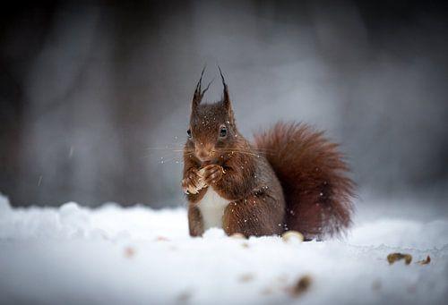 Squirrel in the snow van
