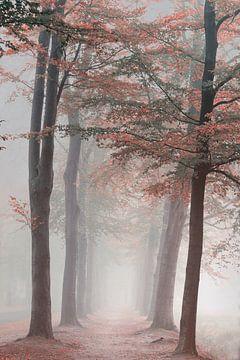 Herfst Droom. Autumn dream. van Saskia Dingemans