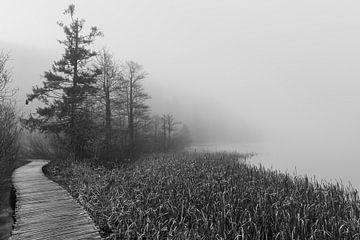 Sumpf im Nebel von Peter Wierda