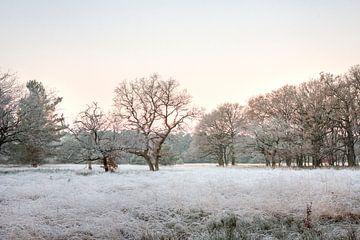 Bevroren landschap op de Veluwe van Evert Jan Kip