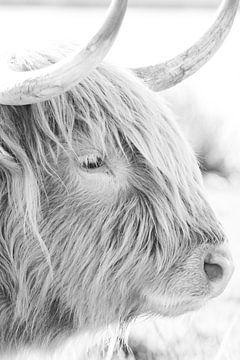 Prächtiger schottischer Hochländer von Mascha Looije