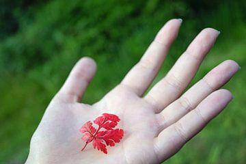 Rotes Blatt auf flacher Hand. von Babetts Bildergalerie