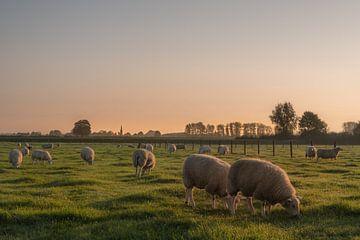 Schapen in de herfstzon van Moetwil en van Dijk - Fotografie