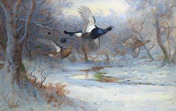 Birkhahn und Schneehuhn auf der Flucht, Archibald Thorburn