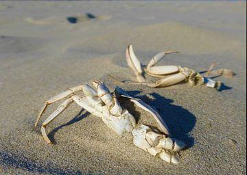 Krabben in het zand van Jessica Berendsen