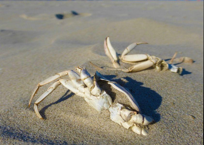 Krabben in het zand